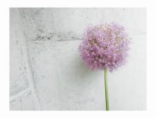 【お花たちの行く末…*】