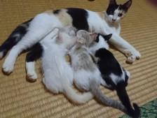 ユートピアで猫ファミリー救出のその後