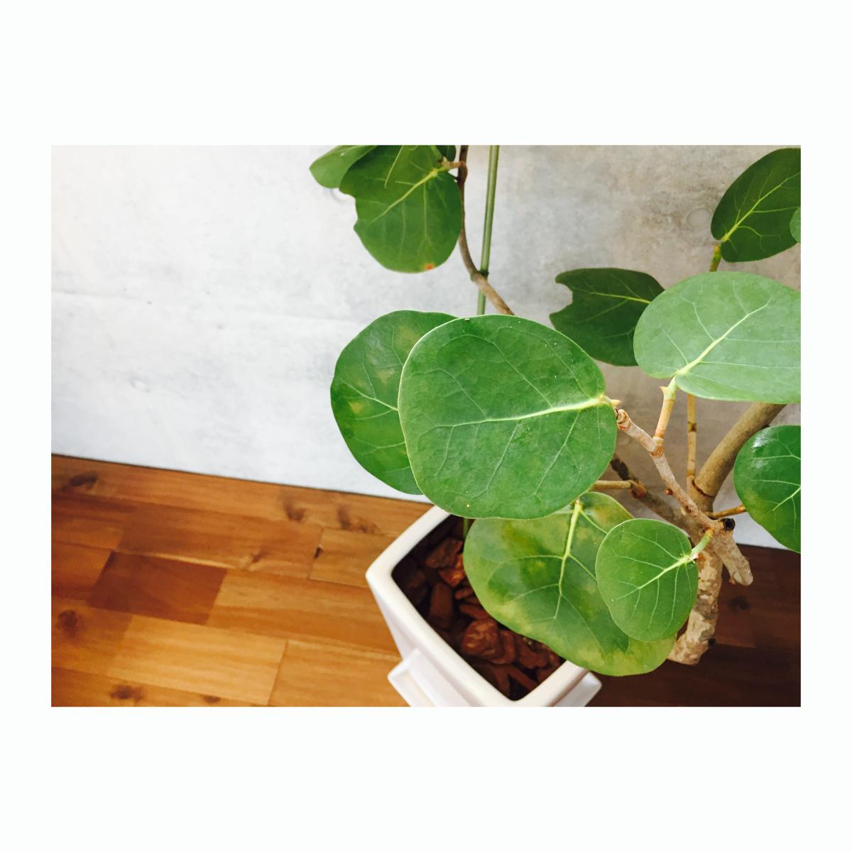 【植物奮闘記】